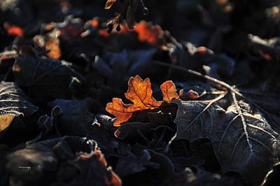Photograph - Spotlight by Randi Grace Nilsberg