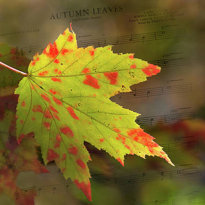 Photograph - Spotted Autumn Leaf - Sheet Music by Judy Garrard