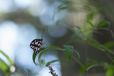 Photograph - Spotted Beauty by Kathleen Messmer