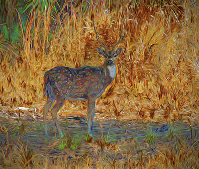 Photograph - Spotted Deer, Artistic Conversion by Richard Goldman