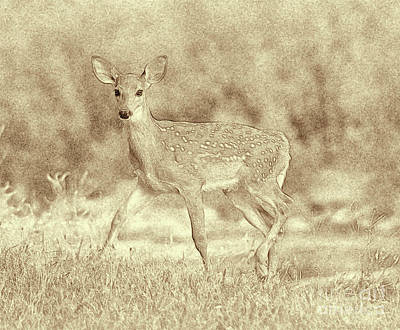 Abstract Graphics Rights Managed Images - Spotted Fawn Royalty-Free Image by Jim Lepard