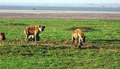 Photograph - Spotted Hyenas by Sally Weigand