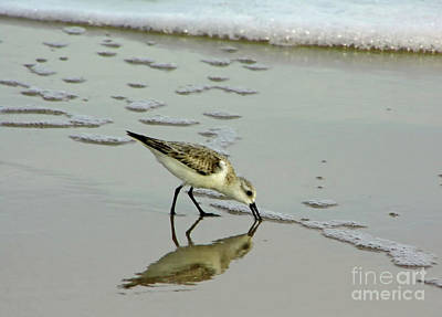 Photograph - Spotted Sandpiper In The Surf by D Hackett