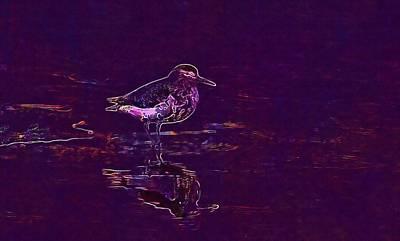 Sandpiper Digital Art - Spotted Sandpiper Water Bird Wading  by PixBreak Art