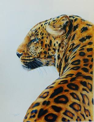 African Big Cats Drawing - Spotted by Taylor Ann