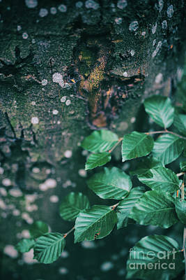 Photograph - Spotted Tree Bark And A Branch Of Green Leaves by Michal Bednarek