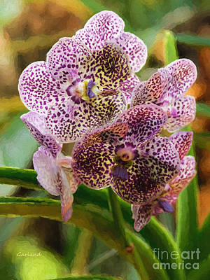 Impasto Mixed Media - Spotted Violet Orchid by Garland Johnson