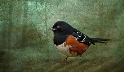 Photograph - Spotted Towhee - 365-183 by Inge Riis McDonald
