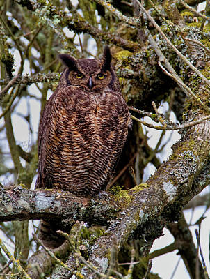 Photograph - Spotting Owls by Craig Strand