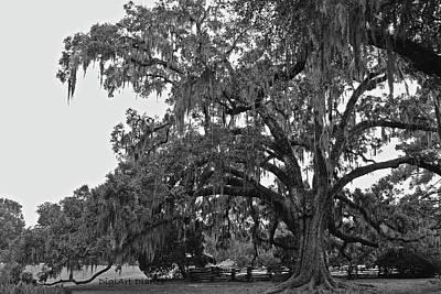 Plantations Digital Art - Sprawling Live Oak I I by DigiArt Diaries by Vicky B Fuller