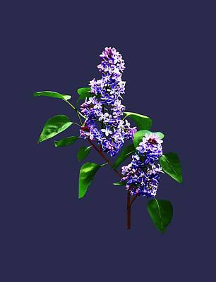 Photograph - Spray Of Lilacs by Susan Savad