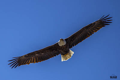 Spread Eagle Art Print by Rick  Blood