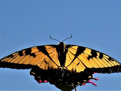 Photograph - Spread Your Wings - 2 by Frank Chipasula