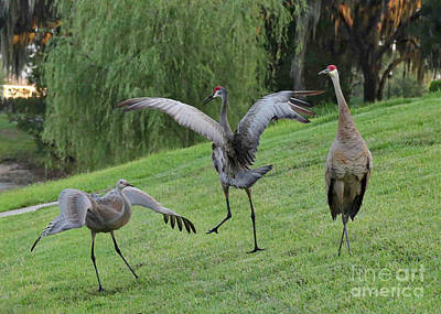 Crane Photograph - Spread Your Wings by Carol Groenen