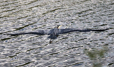 Target Threshold Photography - Spread Your Wings by Roy Williams