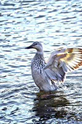 Photograph - Spreading My Wings Hdr by Lesa Fine