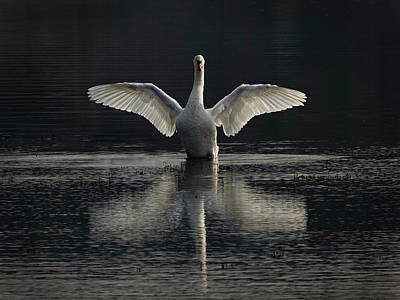 Photograph - Spreading My Wings by Inge Riis McDonald