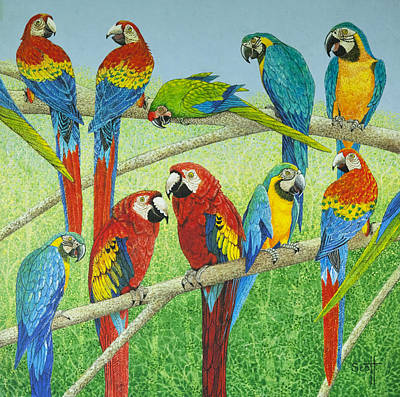 Macaw Painting - Spreading The News by Pat Scott