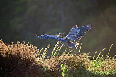 Photograph - Spreading The Wings by Keith Boone