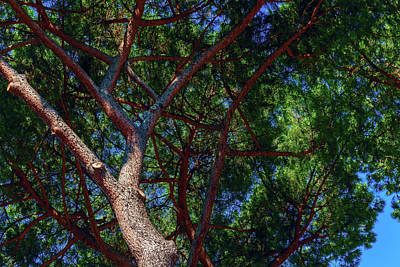 Spreading Trees Provide Shade And Coolness On A Hot Summer Day Art Print by George Westermak