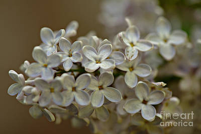 Photograph - Spring 2016 14 by Cendrine Marrouat