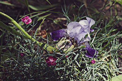 Photograph - Spring 2016 17 by Cendrine Marrouat