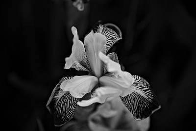 Photograph - Spring 2016 20 by Cendrine Marrouat