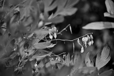 Photograph - Spring 2016 25 by Cendrine Marrouat
