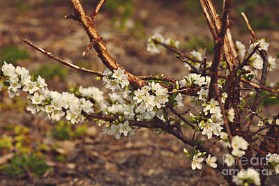 Photograph - Spring 2016 4 by Cendrine Marrouat