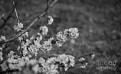 Photograph - Spring 2016 9 by Cendrine Marrouat
