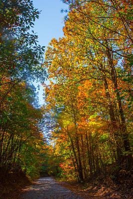 Photograph - Spring And Fall Colors In The Forest by Parker Cunningham