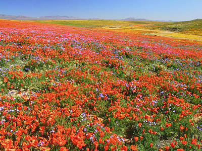 Photograph - Spring, Antelope Valley by Tom Kidd