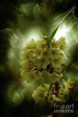 Photograph - Spring Apple Blossoms by Sherman Perry