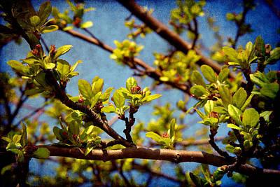 Photograph - Spring Arrived by Milena Ilieva