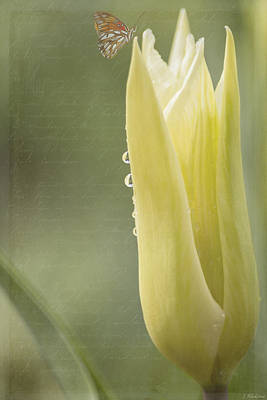 Photograph - Spring Art - Spirit Of Love by Jordan Blackstone