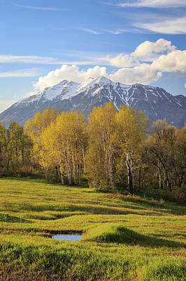 Photograph - Spring Aspens On Squaw Peak. by Johnny Adolphson