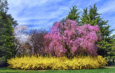 Photograph - Spring At The Arboretum by Carolyn Derstine