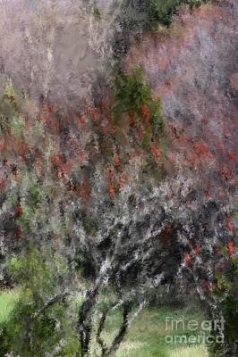 Photograph - Spring At The Hacienda by David Lane