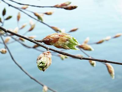 Photograph - Spring At The Lake by Karen Stahlros
