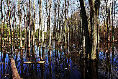 Photograph - Spring At The Pond by Debbie Oppermann