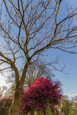 Manchester Photograph - Spring At Whitworth Park, Manchester, Uk by Iordanis Pallikaras