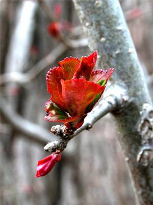 Photograph - Spring Awakening by Juergen Roth
