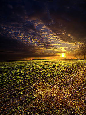 Environement Photograph - Spring Awakening by Phil Koch