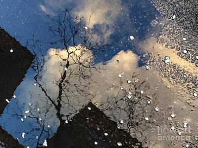 Photograph - Spring Awakenings - World In A Puddle by Miriam Danar