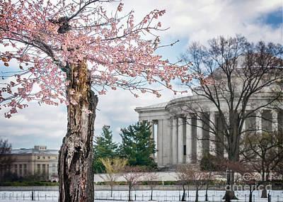 Photograph - Spring Awakens In Dc I by Karen Jorstad
