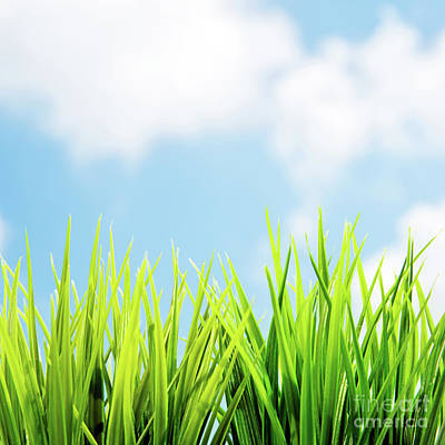 Photograph - Spring Background by Anna Om