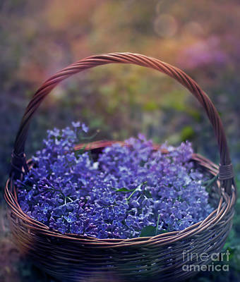 Photograph - Spring Basket by Ezo Oneir