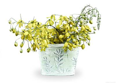 Cassia Blossoms Photograph - Spring Basket  by Chrystyne Novack