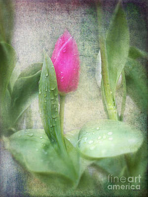 Photograph - Spring Bath by Eena Bo
