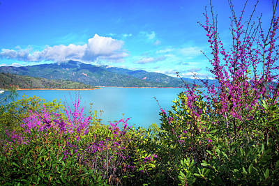 Photograph - Spring Beauty At Shasta Lake by Lynn Bauer